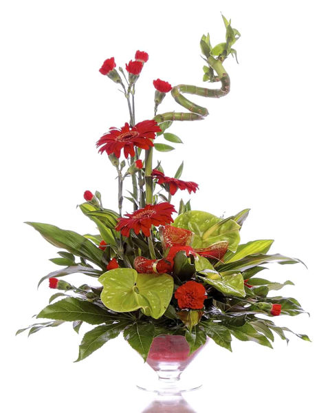 Picture of Anthurium Glory
